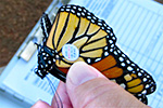 BioBlitz Program Features Monarch Butterflies
